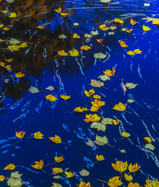 Fallen Leaves. Blue Water