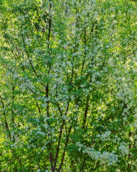 Spring Flowers III
