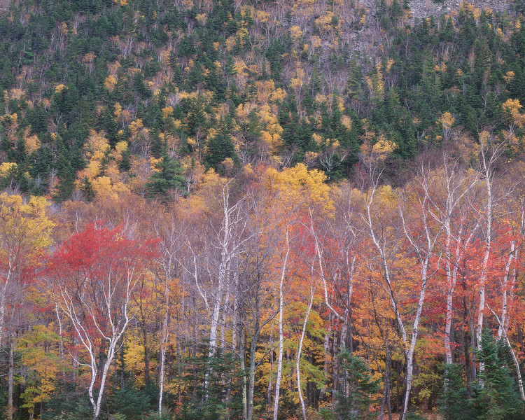 Cliffside II, Crawford Notch