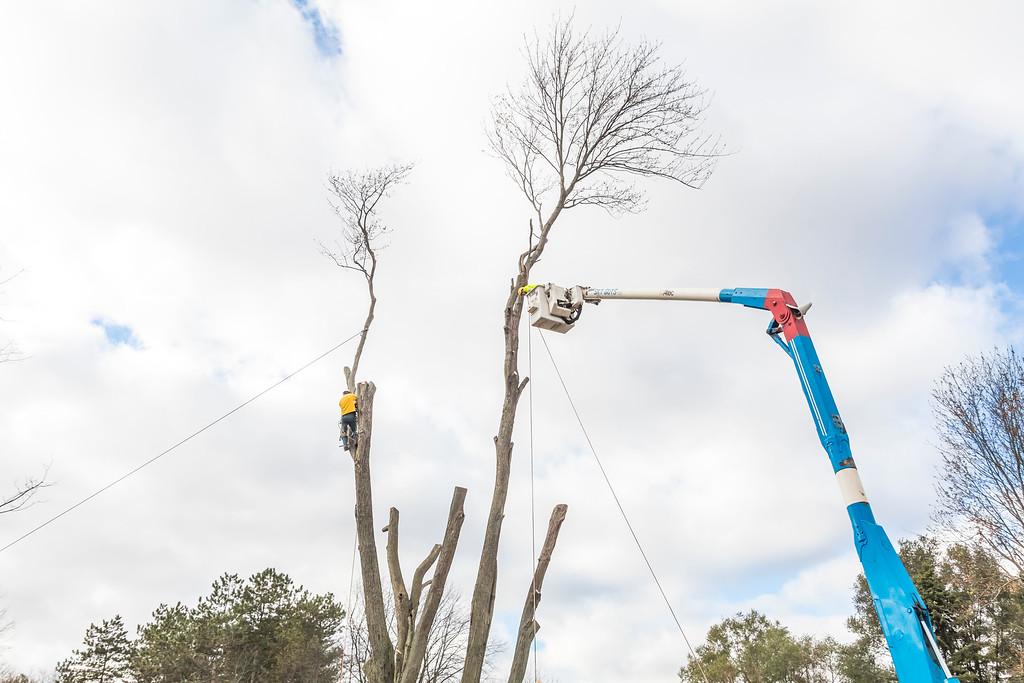 IMAGE: https://photos.smugmug.com/SKY-GUYS-LLC-Tree-Service/i-4sScbS6/0/XL/SkyGuys_0229-XL.jpg