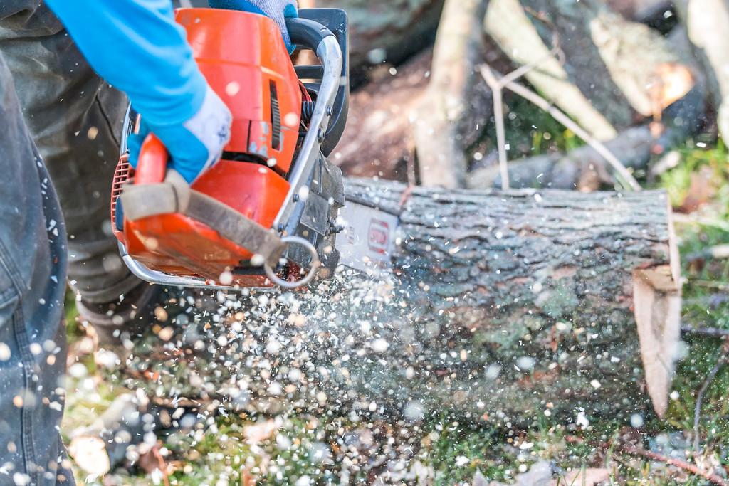 IMAGE: https://photos.smugmug.com/SKY-GUYS-LLC-Tree-Service/i-BMxzTjJ/0/XL/SkyGuys_0097-XL.jpg