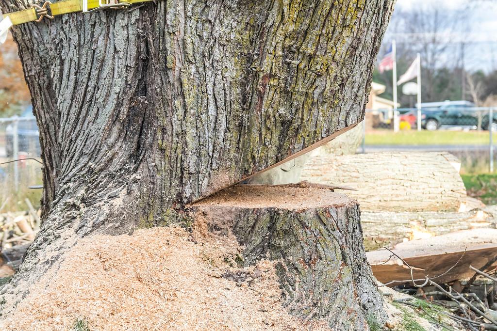 IMAGE: https://photos.smugmug.com/SKY-GUYS-LLC-Tree-Service/i-WzD7485/0/XL/SkyGuys_0274-XL.jpg