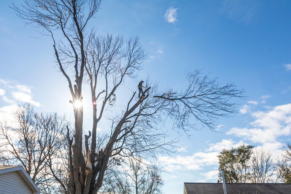 IMAGE: https://photos.smugmug.com/SKY-GUYS-LLC-Tree-Service/i-sVvtrM9/0/XL/SkyGuys_0095-XL.jpg