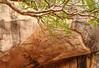 Sigiriya boulders448