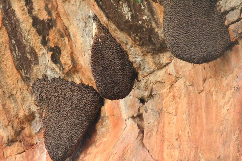Beehives1465