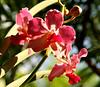 orchids1442