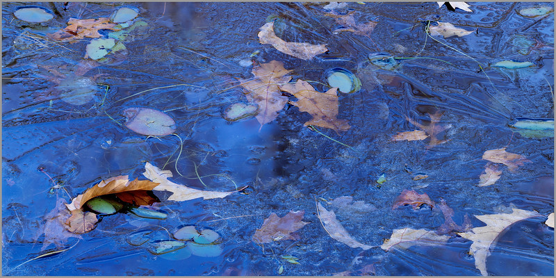 Blue Ice And Oak Leaves