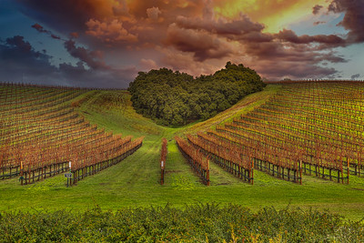 Vineyards 102