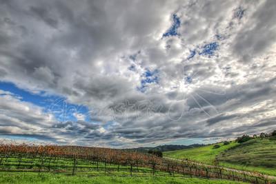 Vineyards_43