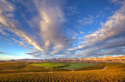 Vineyards-44