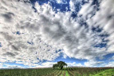 Vineyards_41