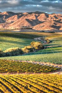 Vineyards-49