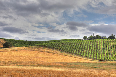 Vineyards 118