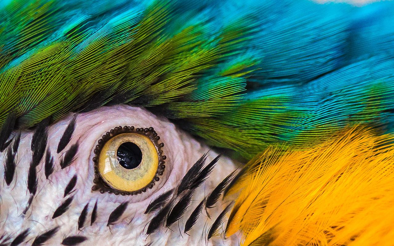 Our Macaw Tiki