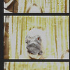Rachel+Paul ~ Photobooth Collages!_009