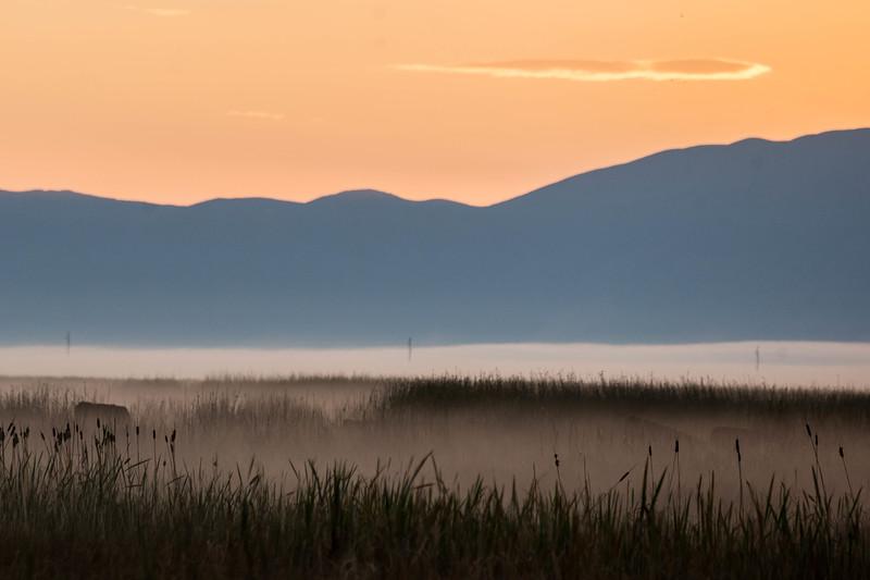 Early morning graze