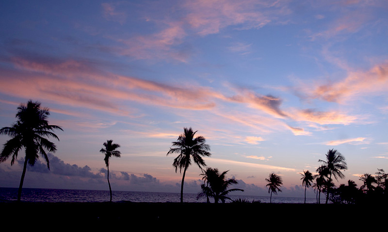 Swaying palm trees near the ocean at sunset.