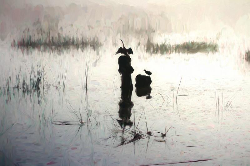 Wetlands, Foggy Morning