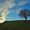 Tree and clouds-Ti