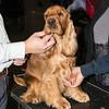 Voglio le coccole - Esposizione internazionale canina Modena gen