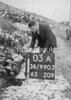 SD990303A, Man marking Ordnance Survey minor control revision point with an arrow in 1950s