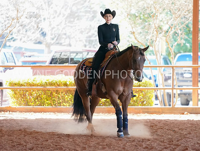 Dallas Equine Photographer
