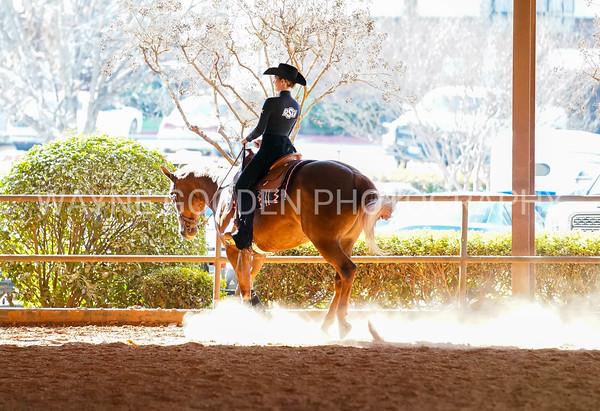 Dallas Equine Photographer