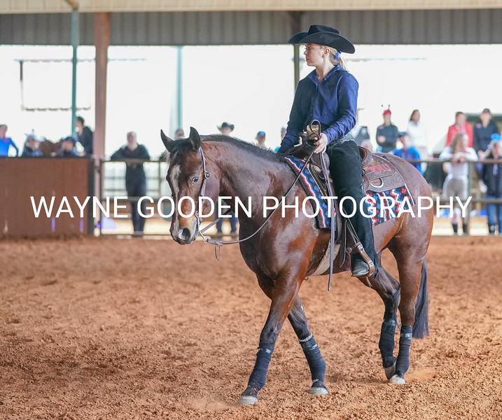 Equine Photography by