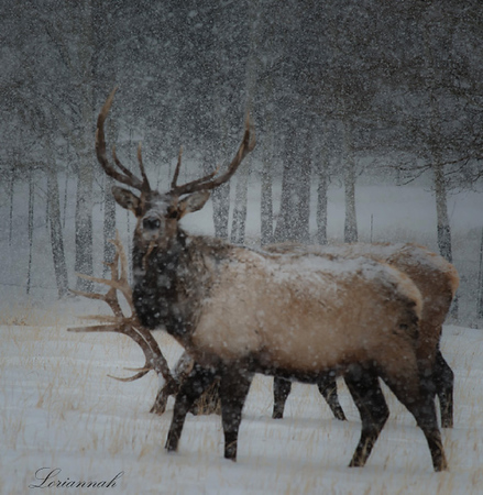 . Snow in RMNP gallery.  Courtesy of Loriannah Hespe