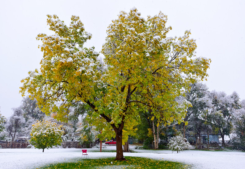 Snow in Longmont