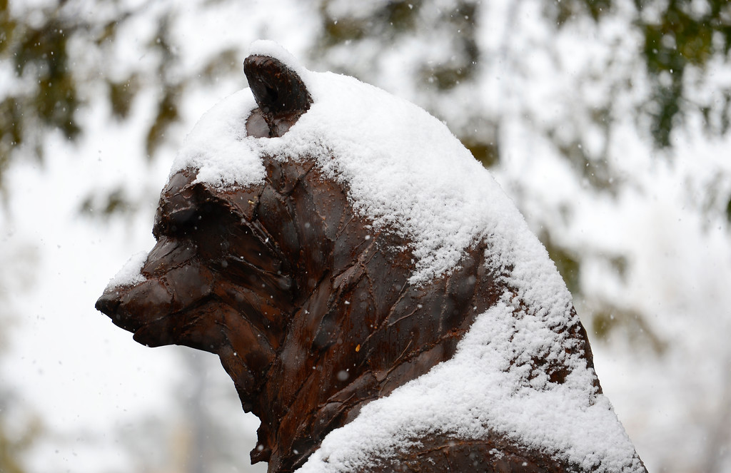 ". Snow covers the ""Ursa Major\"" bear sculpture on the 500 Block of Main Street in Longmont Colorado on Oct. 9, 2017.  (Photo by Matthew Jonas/Times-Call)"