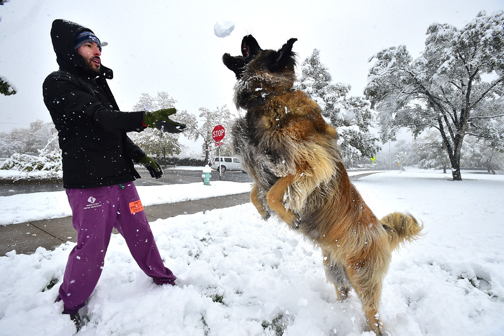 . Kelly Schneiderman throws a snowball for the dog Beeker to catch at North Boulder Park on a snowy Monday. It\'s his favorite thing to do says Schneiderman. For more photos go to dailycamera.com Paul Aiken Staff Photographer / Oct 9 2017