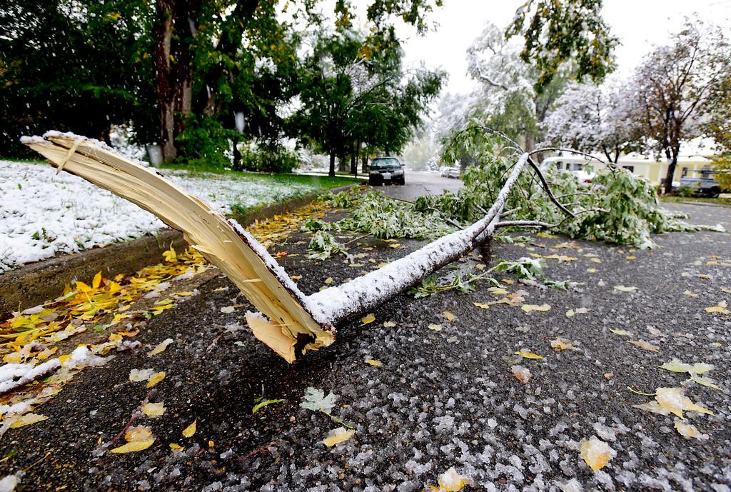 . A broken tree limb lies on the 500 Block of Baker Street in Longmont Colorado on Oct. 9, 2017.  (Photo by Matthew Jonas/Times-Call)