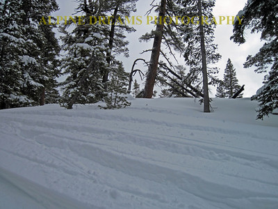 One of the many ski boundary woods that give new meaning to the words fresh tracks.