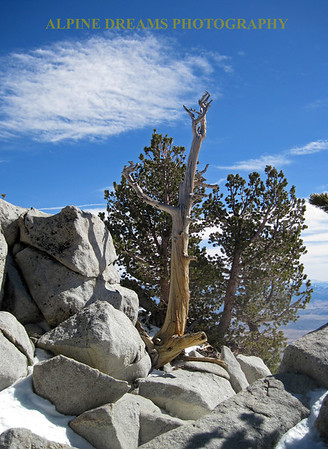 ROCKS-DEAD-TREES-with-a-VIEW