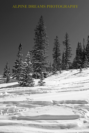 WINTER SPLENDOR in B&W