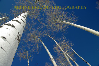 ASPEN VIEWS TO THE SKY