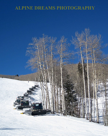 NINE-GROOMERS-in-the-SUN