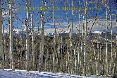 VAIL ASPEN BEAUTY...    This shot is one of my favorites.   Shot near LOST BOY the view of the mountain range seen through the stand of Aspens is Beautiful!