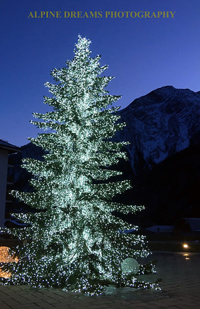 This tree was lit in the twilight of the mountains   best of both worlds    this could have been a christmas card.