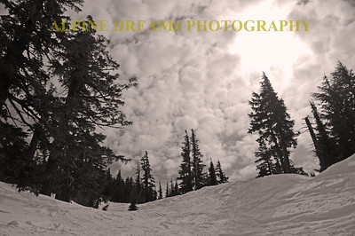 I called this    TREE BOWL IN BLACK & WHITE    --   I used a warming filter and layed down and shot  back towards the top of the bowl. The camera was only about 4 inches off the snow and I played with the angles  until I got this one. I used a warming filter because a UV would have been too blown out or overexposed.  This was perfect for Black & white.  ----     PS   The SNOW in here was AWESOME!