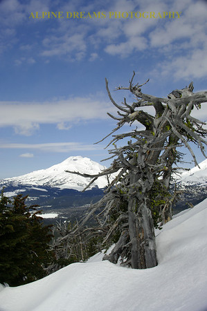 I named this GNARLY TREE & SISTER  --  This tree and many more like it are scattered around the ski trails. The amount of wear and tear and  wind has shaped this tree into a twisted work of art.  The south Sister sits to the left.