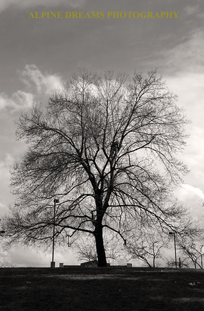 PRUNING A TREE IN BLACK & WHITE