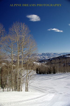 ASPENS AND GROOMERS