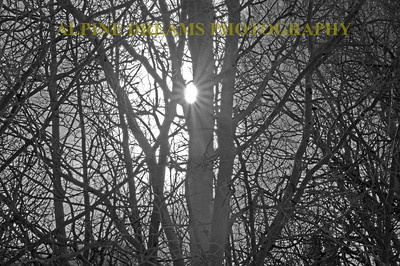 SUNBURST IN DEEP WOODS IN B&W