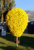 7/27/12  Citrus Classic Balloon Festival in Santa Paula, CA   .... Now this is a lemon tree....  The background leaves something to be desired tho....