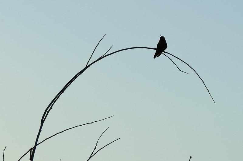 The lonely hummer, Castiac Lake sunrise.