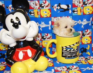 XX SOLD Puppies X Customer Info. Will Be Added Soon XX