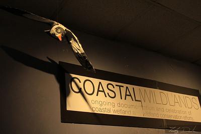Coastal Wildlands 2011-3