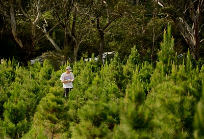 SOS 6 - T3 - Christmas Tree Farm